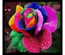 Набор семян разноцветных роз (500 шт.)