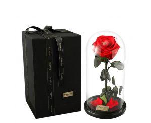 Подарочная живая эквадорская роза в стеклянной колбе